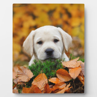 Autumn Labrador Plaque