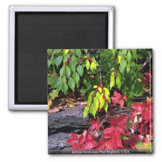 Autumn landscape, New England, U.S.A. Magnet