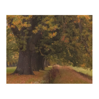 Autumn landscape of trees picture North East Wood Wall Decor