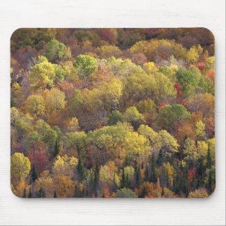 Autumn landscape, Vermont, USA 2 Mouse Mat