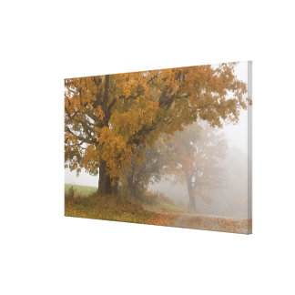 Autumn landscape, Vermont, USA 4 Canvas Print