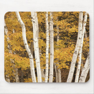 Autumn landscape, Vermont, USA Mouse Mat