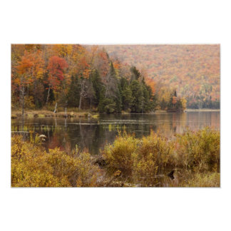 Autumn landscape with lake, Vermont, USA 3 Poster