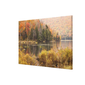 Autumn landscape with lake, Vermont, USA Canvas Print