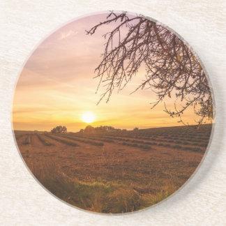 Autumn lavender field on sunset coaster
