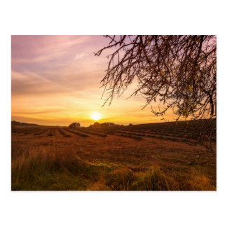 Autumn lavender field on sunset postcard