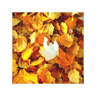 Autumn leaf. canvas print