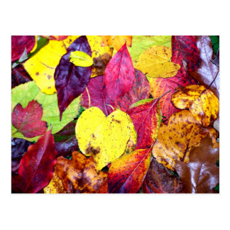 Autumn Leaf Collage Postcard