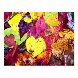 Autumn Leaf Collage Postcard