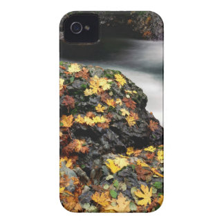 Autumn Leaf Covered Rock Elk River Oregon iPhone 4 Covers