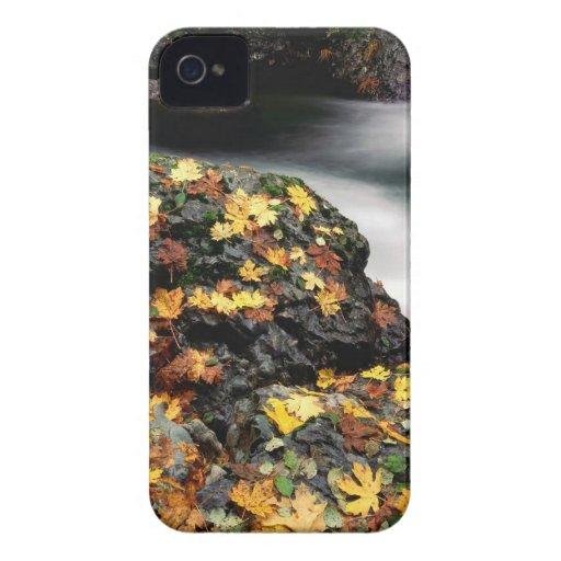 Autumn Leaf Covered Rock Elk River Oregon iPhone 4 Covers