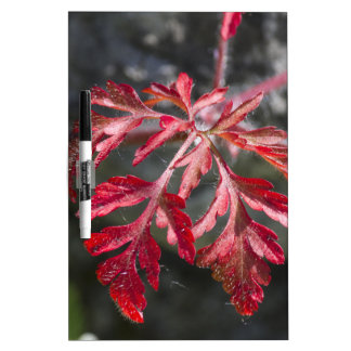 autumn leaf dry erase board