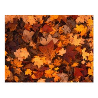 Autumn Leaf Fall Foliage Post Card