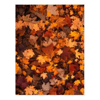 Autumn Leaf Fall Foliage Post Cards