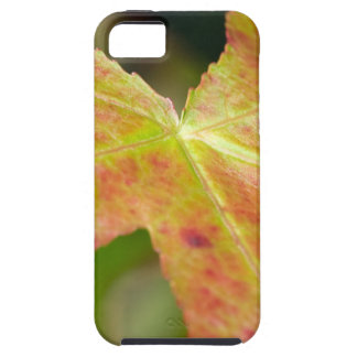 Autumn Leaf in the Forrest iPhone 5 Case
