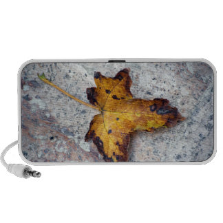 autumn leaf on a stone doodle speakers