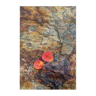 Autumn leaf on rock, California Acrylic Wall Art