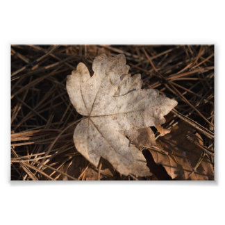 Autumn Leaf Photo Print