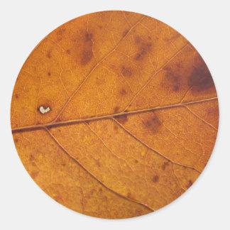 Autumn Leaf Photo Stickers