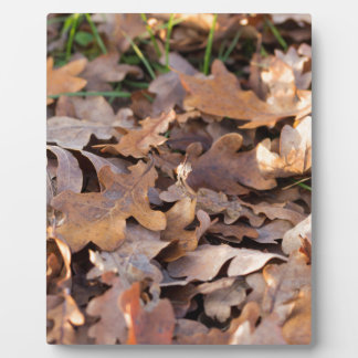 autumn leaf plaque