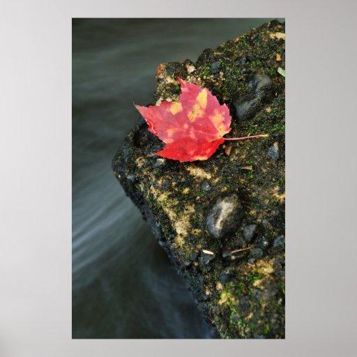 Autumn Leaf Posters