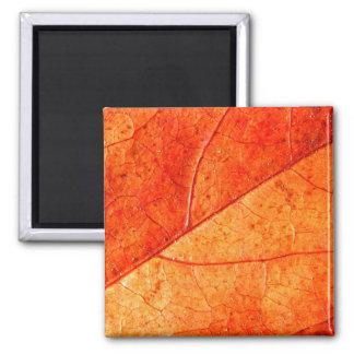 Autumn Leaf Square Magnet