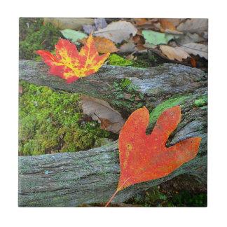 Autumn Leaf Tile