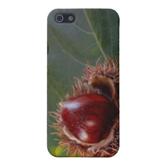 Autumn Leaf With Nut iPhone Case iPhone 5 Cover