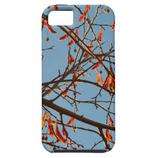 Autumn leafs case for the iPhone 5