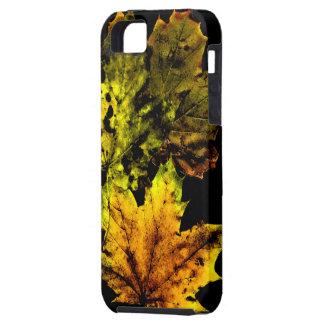 Autumn Leafs iPhone case iPhone 5 Cases
