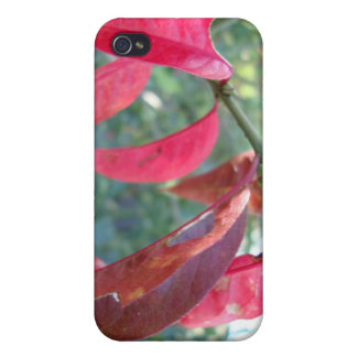 autumn leafs magenta covers for iPhone 4