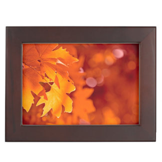 Autumn Leaves 2 Memory Box