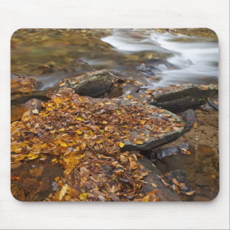 Autumn leaves along Looking Glass Creek in the Mouse Pad