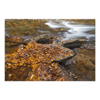 Autumn leaves along Looking Glass Creek in the Photo Print