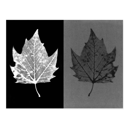 Autumn Leaves Black and White Postcard