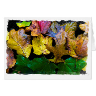 Autumn Leaves Blank Greeting Card By Tom Minutolo