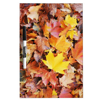 Autumn leaves Dry-Erase boards