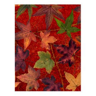 Autumn Leaves Fall Season Tree Leaf Colorful Postcard