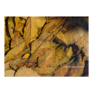 Autumn Leaves in a Rain Puddle Posters