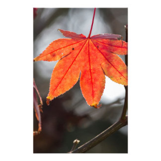 autumn leaves in the garden stationery