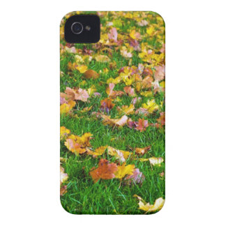 Autumn Leaves in the Green Grass iPhone 4 Cover