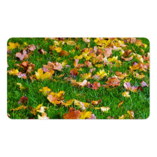 Autumn Leaves in the Green Grass Pack Of Standard Business Cards