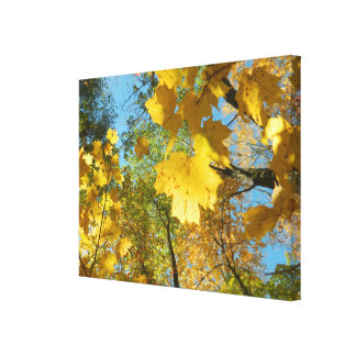 Autumn Leaves in The Sky Stretched Canvas Prints