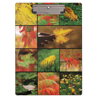 Autumn leaves mix clipboard