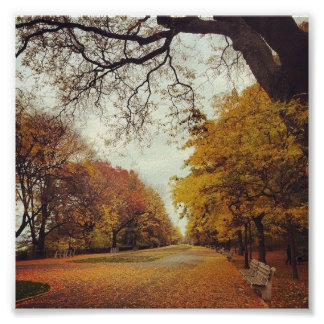 Autumn Leaves NYC Riverside Park New York Fall Art Poster