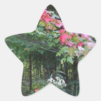 Autumn Leaves on Maple Tree Star Sticker