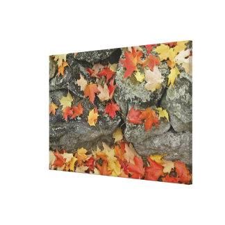 Autumn leaves on stone wall, Minute Man Stretched Canvas Print