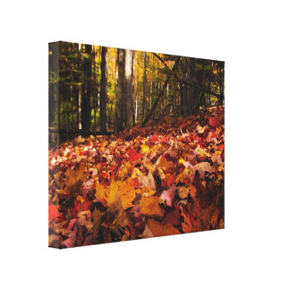 Autumn Leaves on the Forest Floor Stretched Canvas Prints