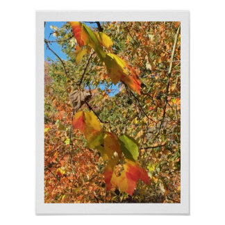 Autumn Leaves Photo Poster