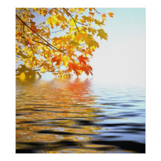 Autumn leaves reflected in water ripples poster